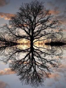Radiant Tree (2)