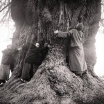 The Tree Huggers-from Thich Nhat Hanh